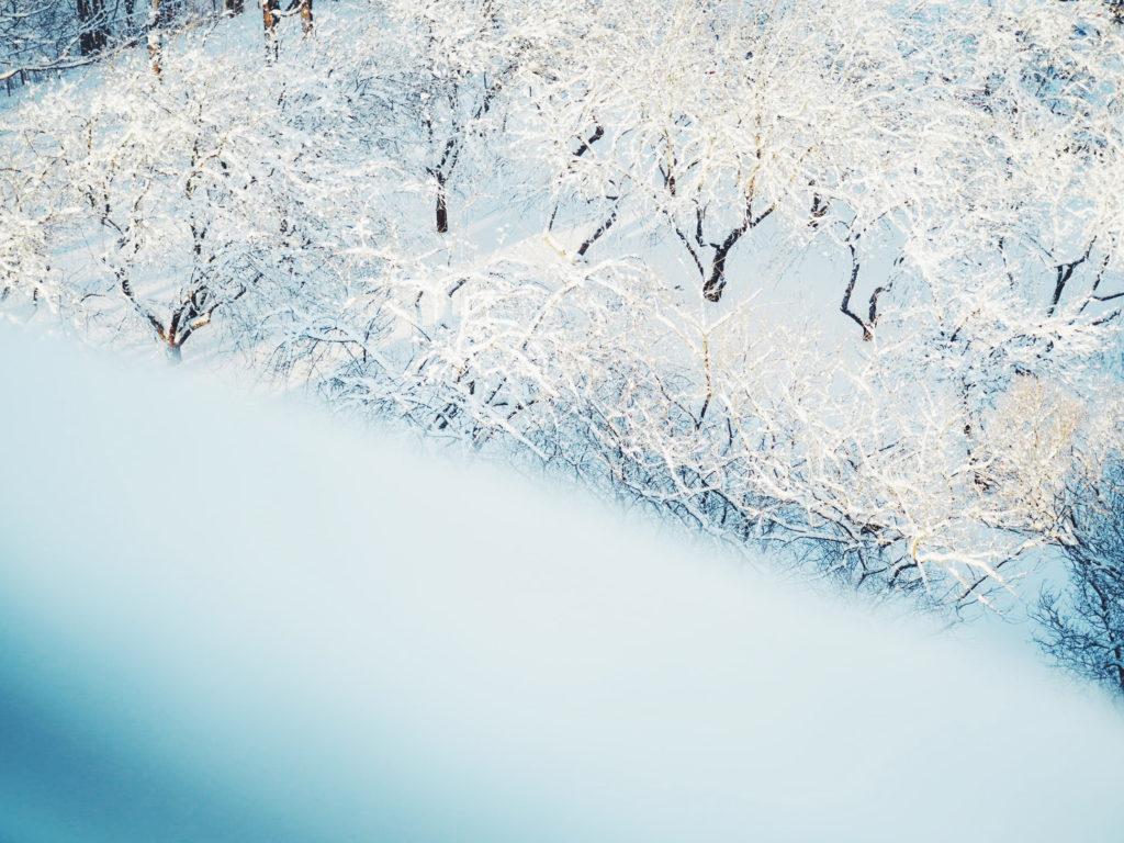 Lumisia omenapuita